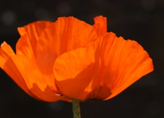 orange flower in close up photography