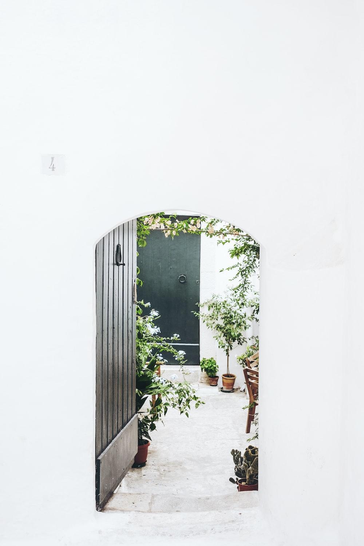 black wooden door near green plant