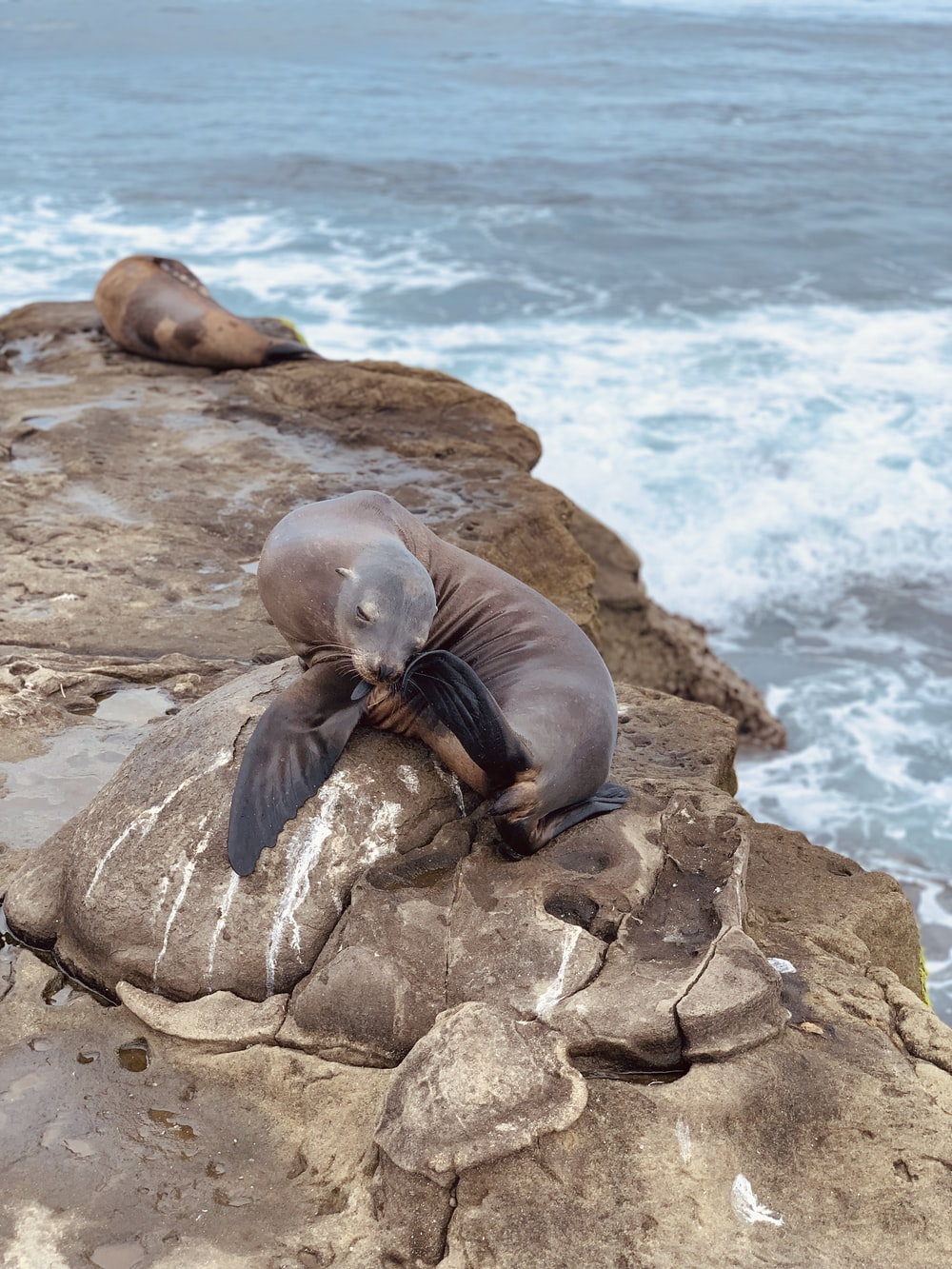 sea lion on rock formation during daytime