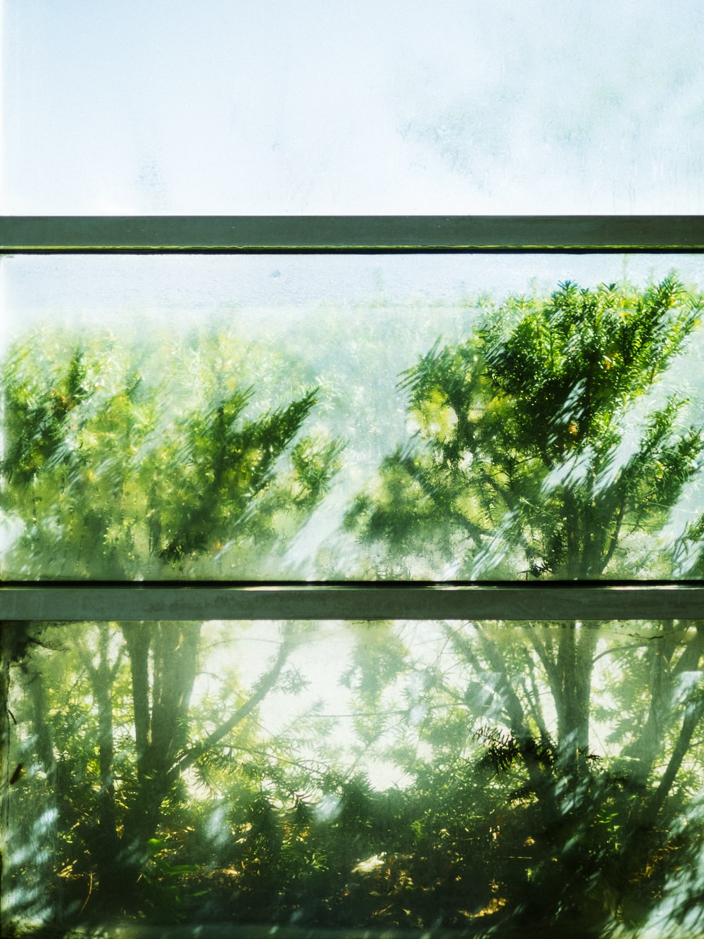 green trees in front of window