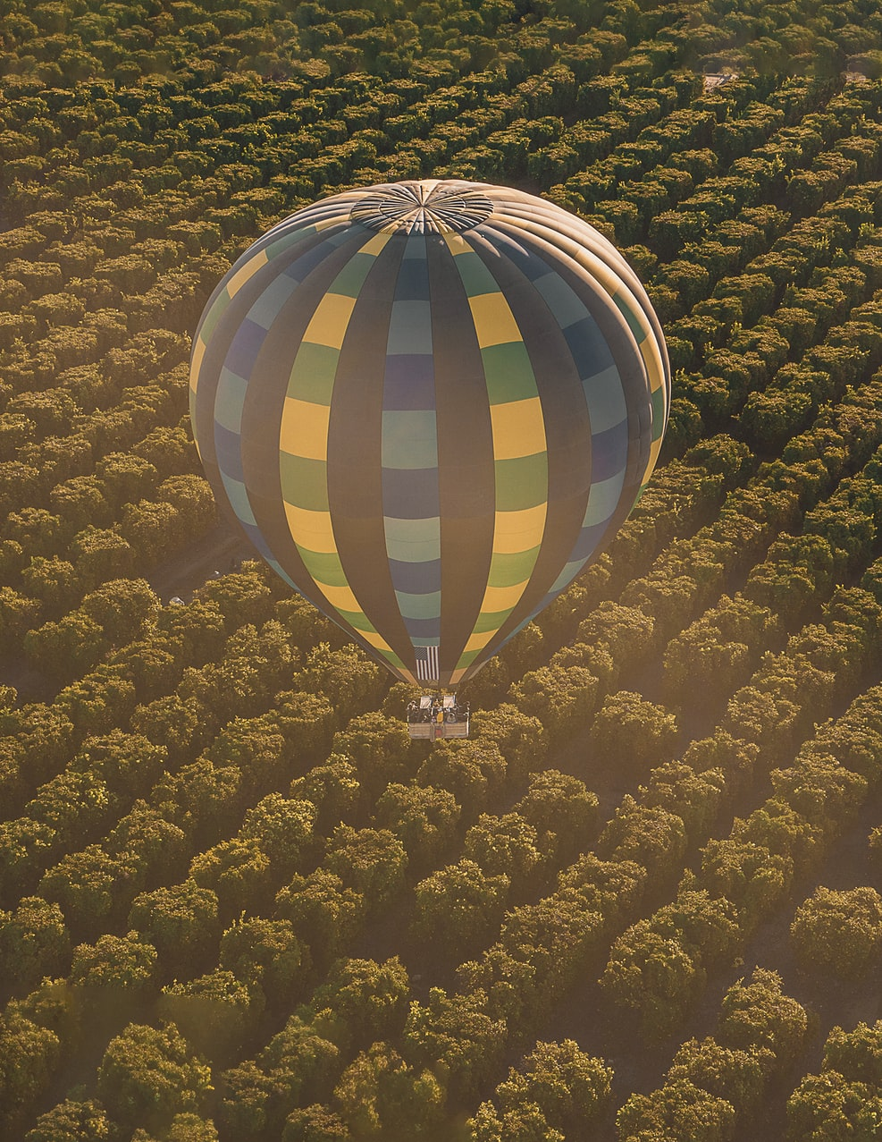 hot air balloon over Temecula Wine Country