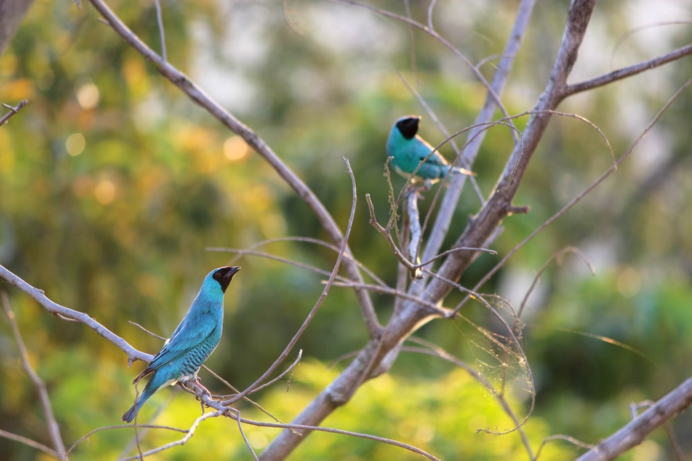 blue and green bird on brown tree branch during daytime