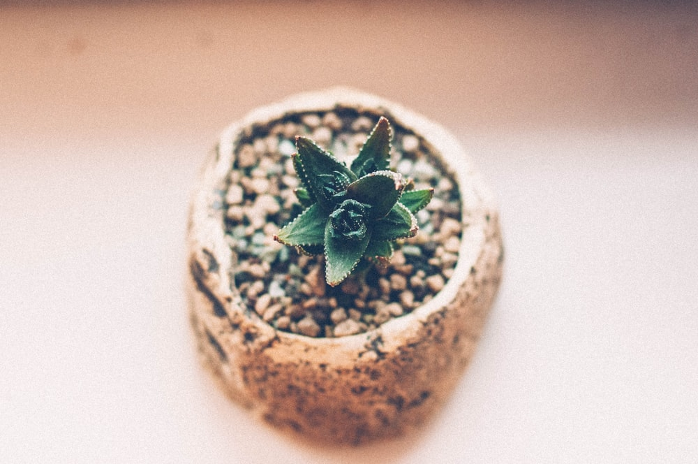 green plant on brown and white round ceramic bowl