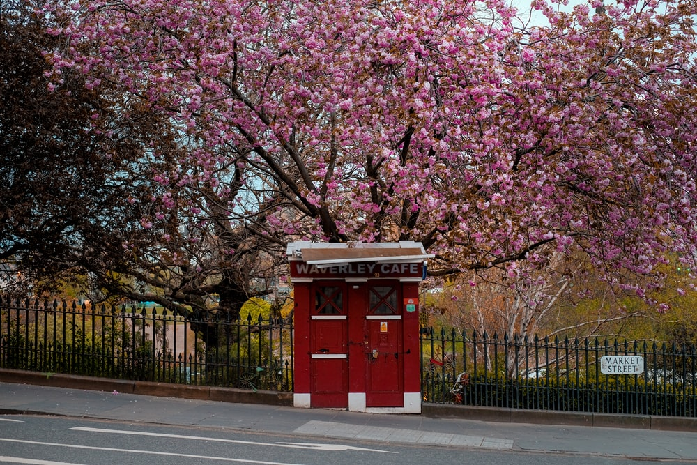 red telephone booth near cherry blossom tree during daytime