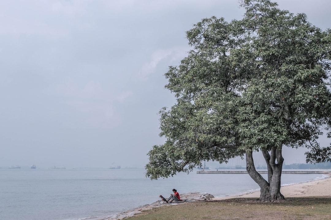 Seeking Seasides  #Singapore #eastcoast #park #miniature #minimal #softlight #tree #beach #explore #haze #greenery #dog #rest