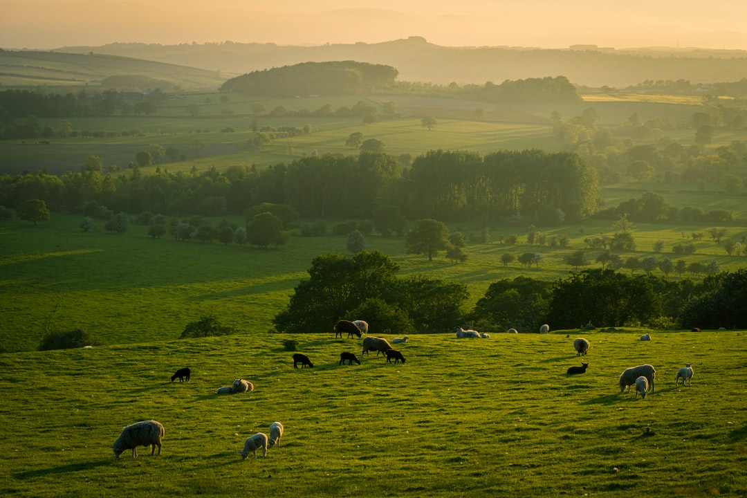 Spring evening in Yorkshire.