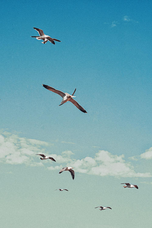 five birds flying under blue sky during daytime