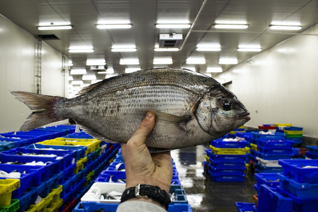 person holding gray fish in a room - the fishing industry is no longer sustainable but it contributes to climate change