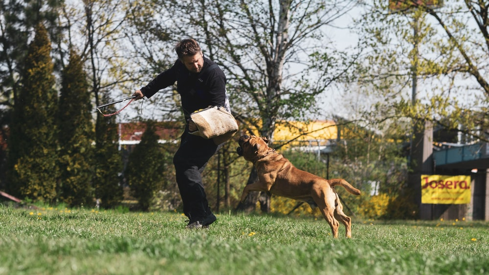 man in black jacket and blue denim jeans holding brown short coated dog on green grass