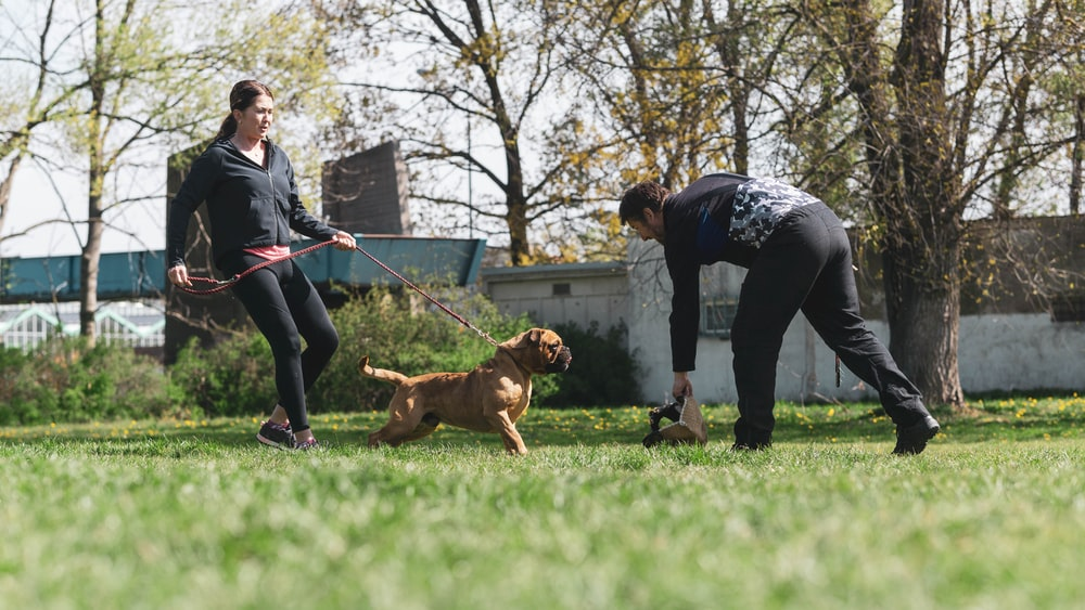 woman in gray long sleeve shirt and black pants holding brown short coated dog
