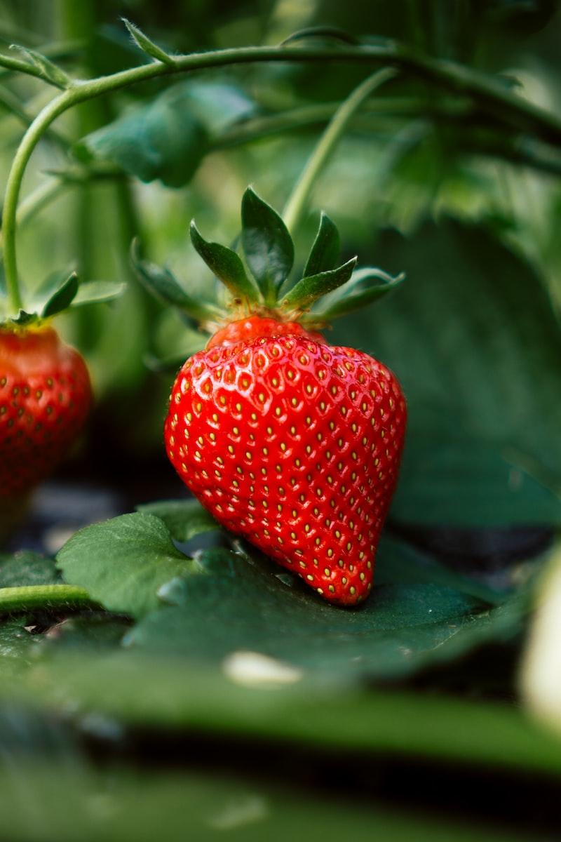 納豆 草莓 豆花 一家人 國道三號
