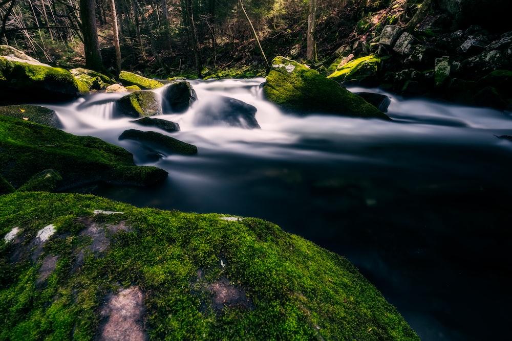 green moss on rock near river