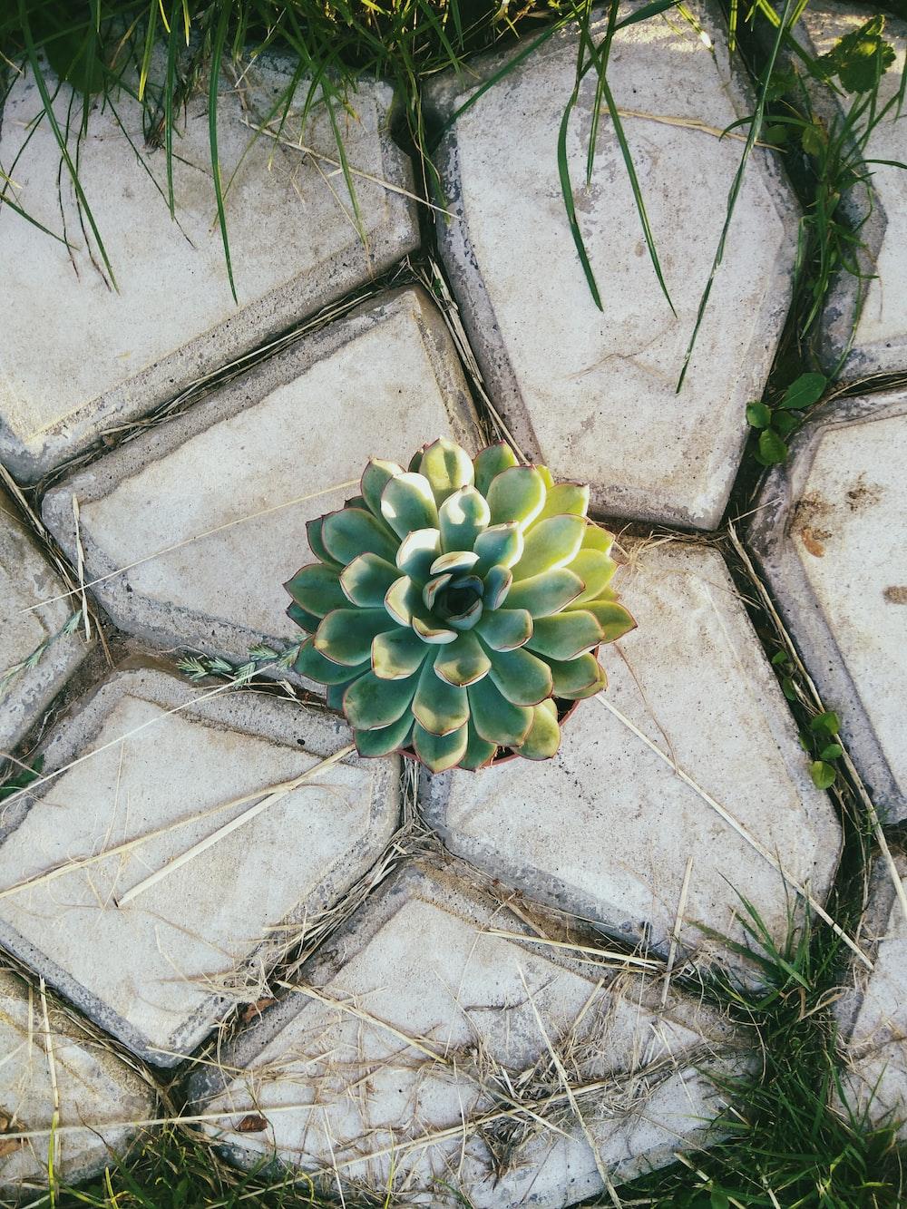 green succulent plant on gray concrete floor