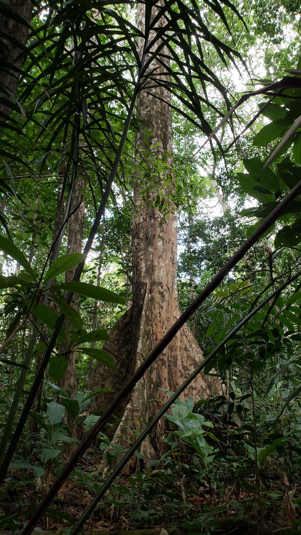 green leaves on brown tree trunk