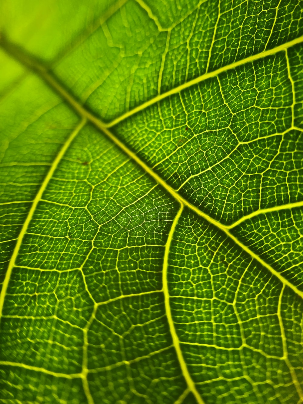 green leaf in macro shot