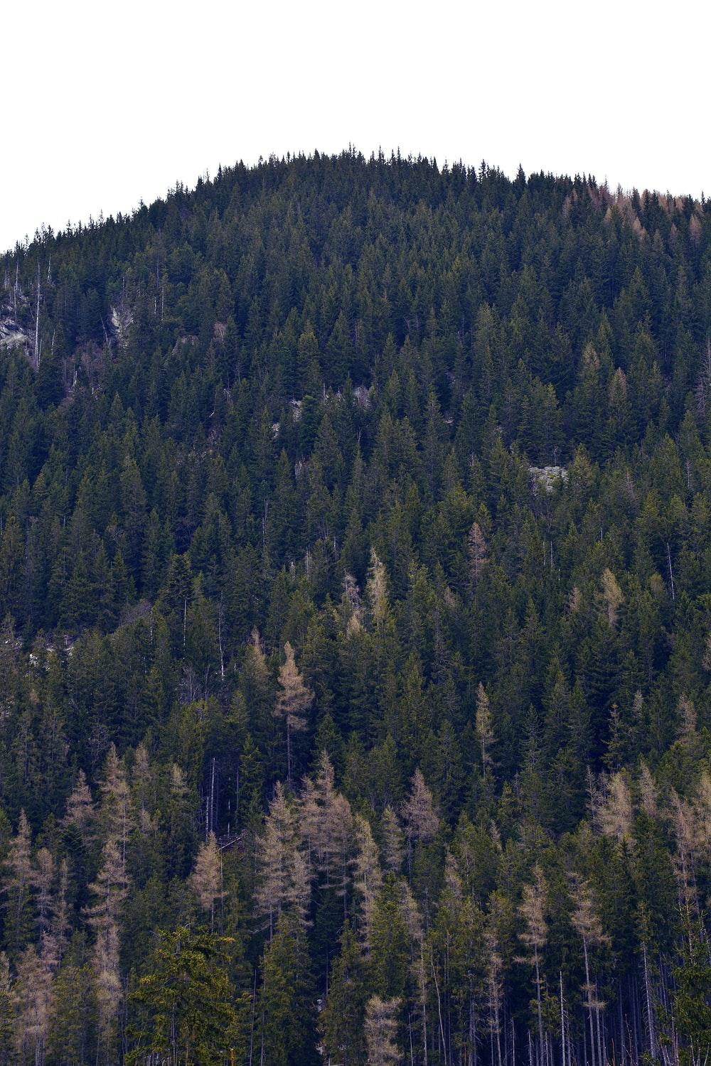 green pine trees on mountain during daytime
