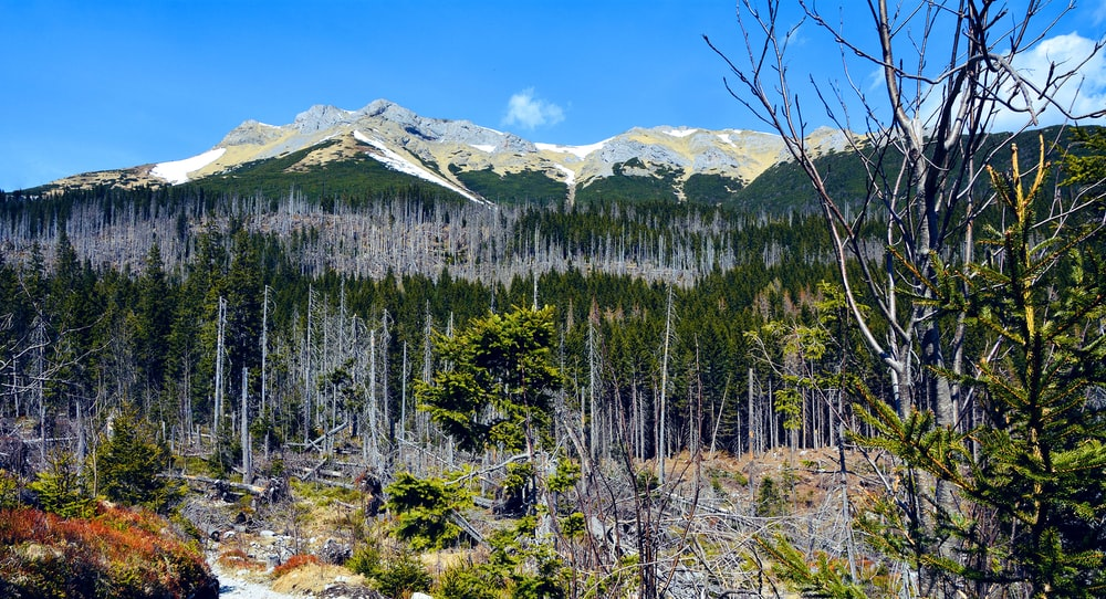 green pine trees near snow covered mountain under blue sky during daytime