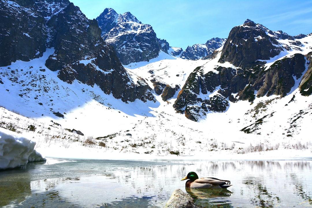 Mountain lake with inhabitant