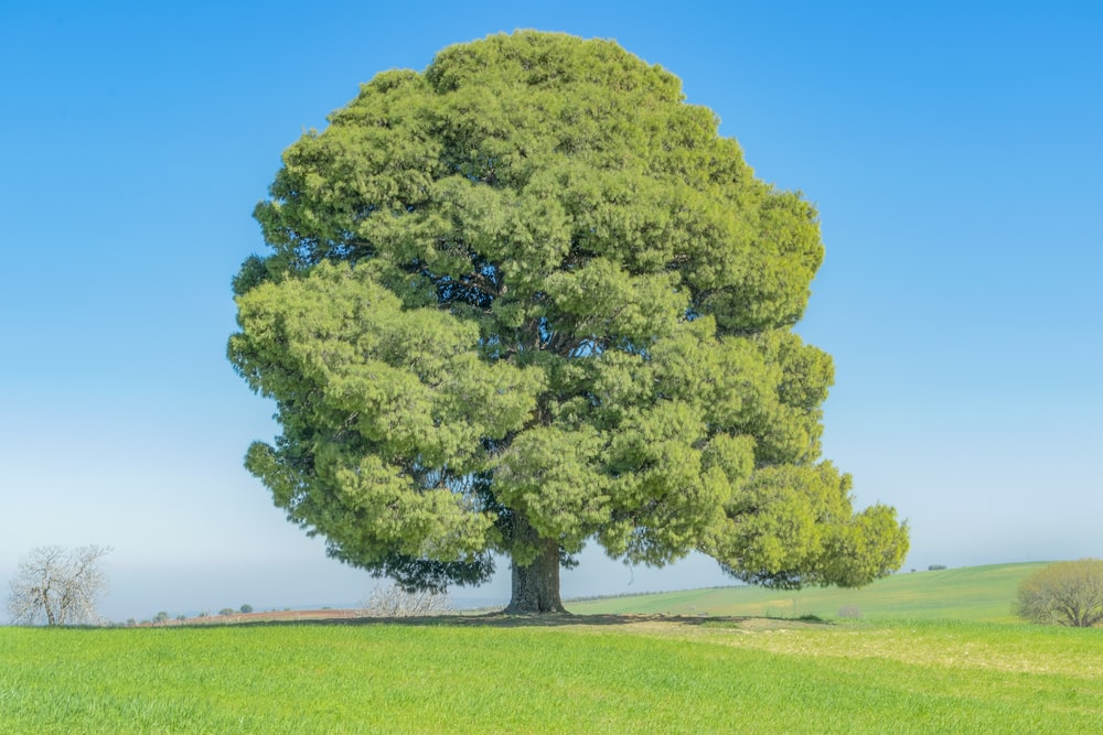 green tree on green grass field during daytime