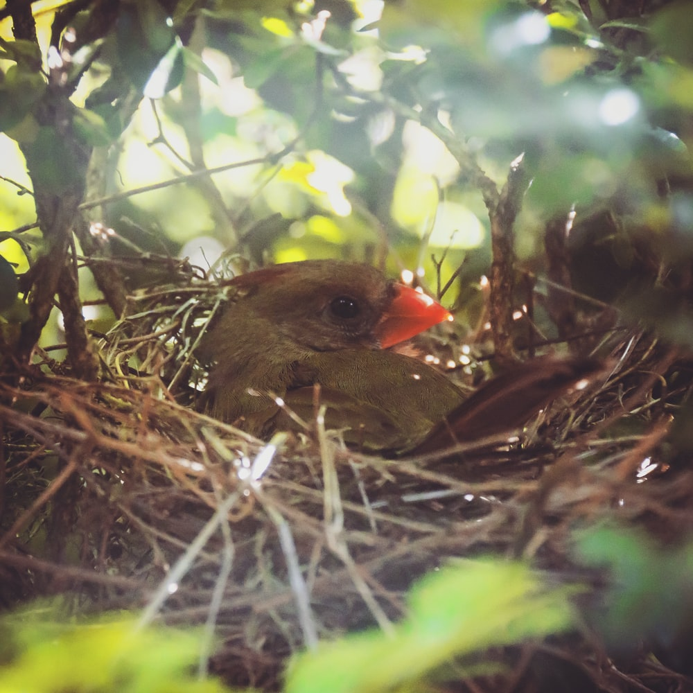 brown and red bird on nest