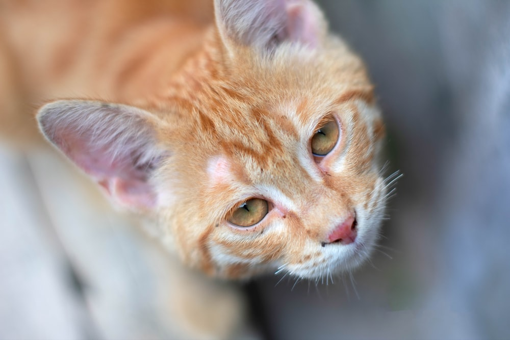 orange tabby cat in tilt shift lens