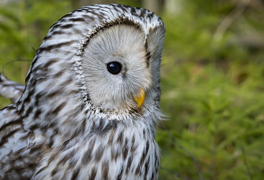 white and black owl on green grass during daytime
