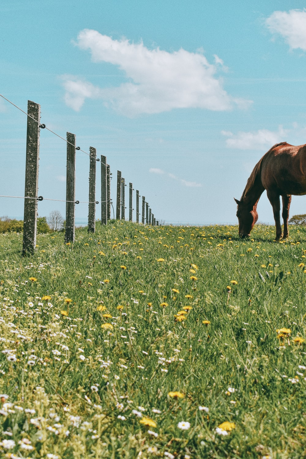 brown horse eating grass on green grass field during daytime