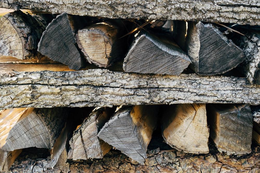 brown and gray wood log