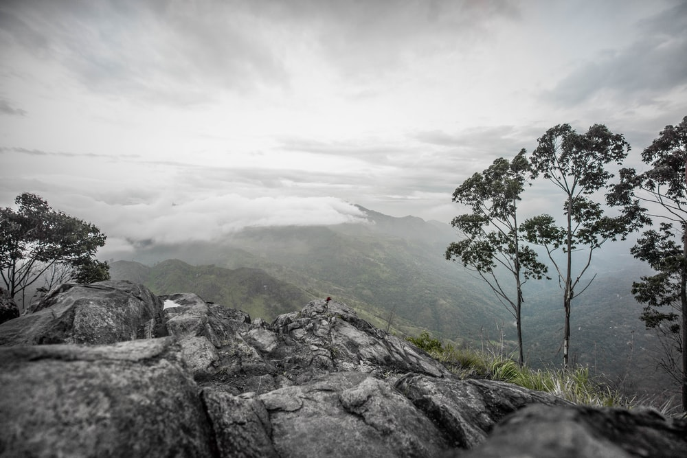 green tree on gray rocky mountain under white cloudy sky during daytime