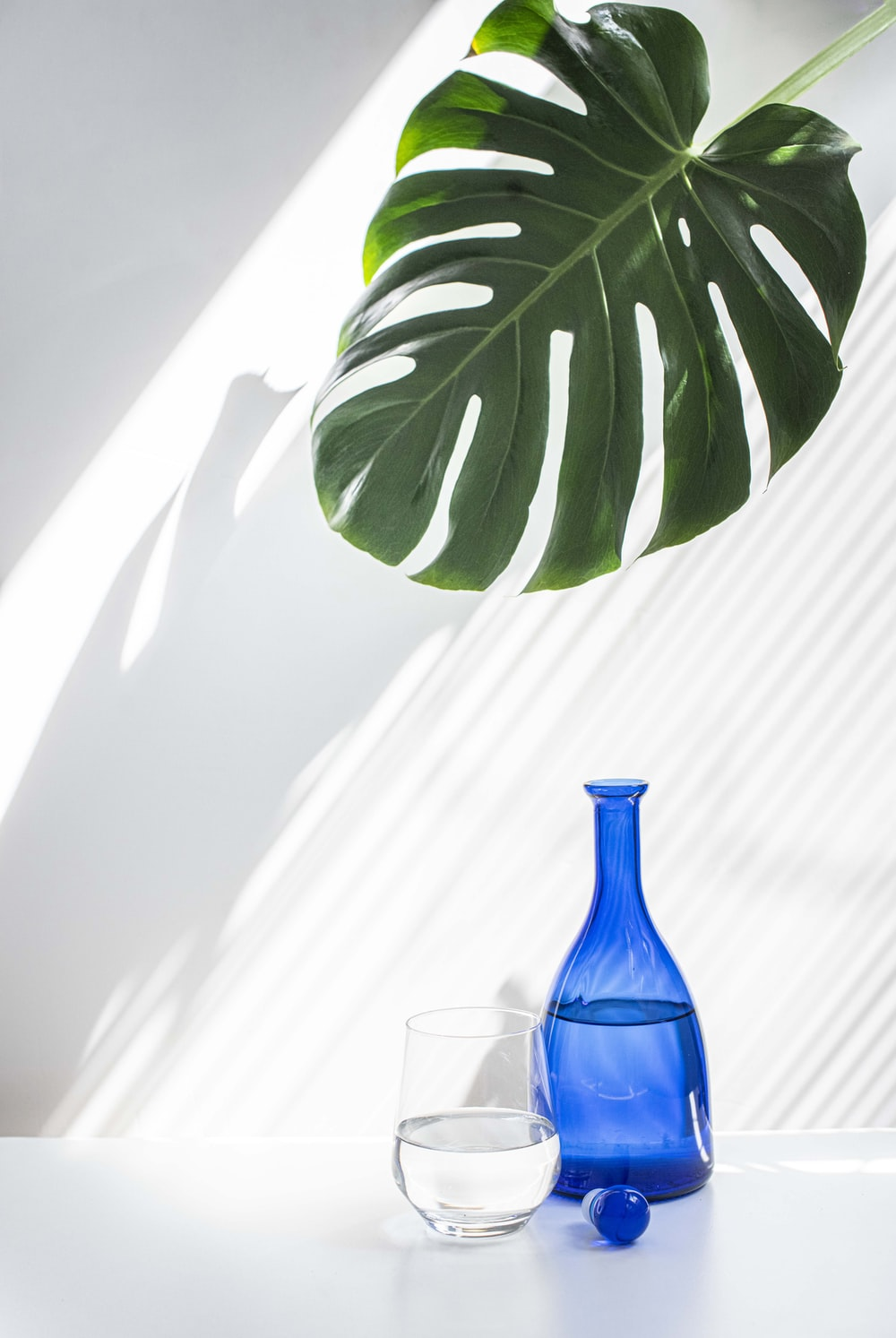green plant in blue glass vase