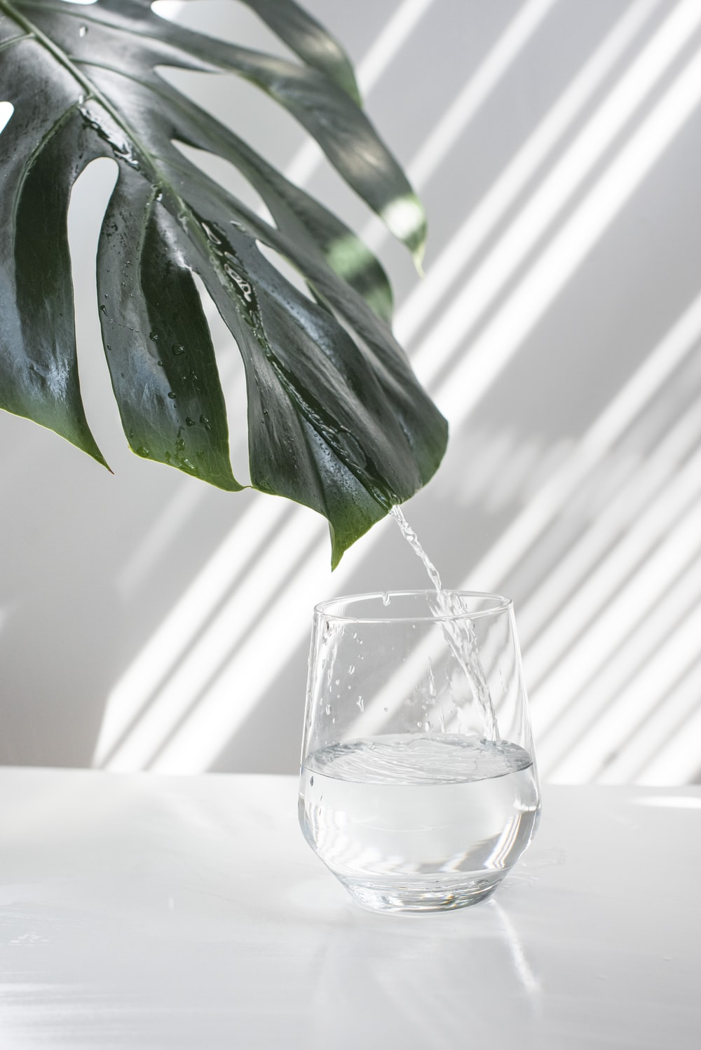 green leaf in clear glass container