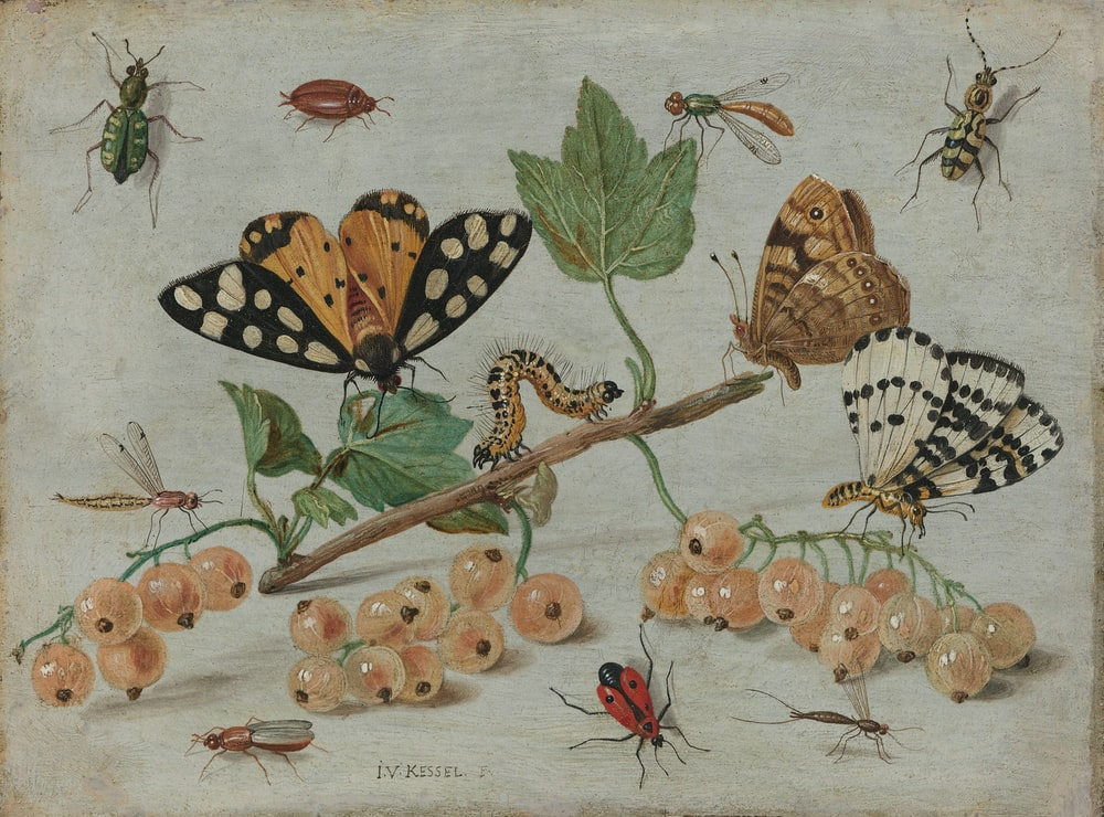 brown and black butterflies on green leaves