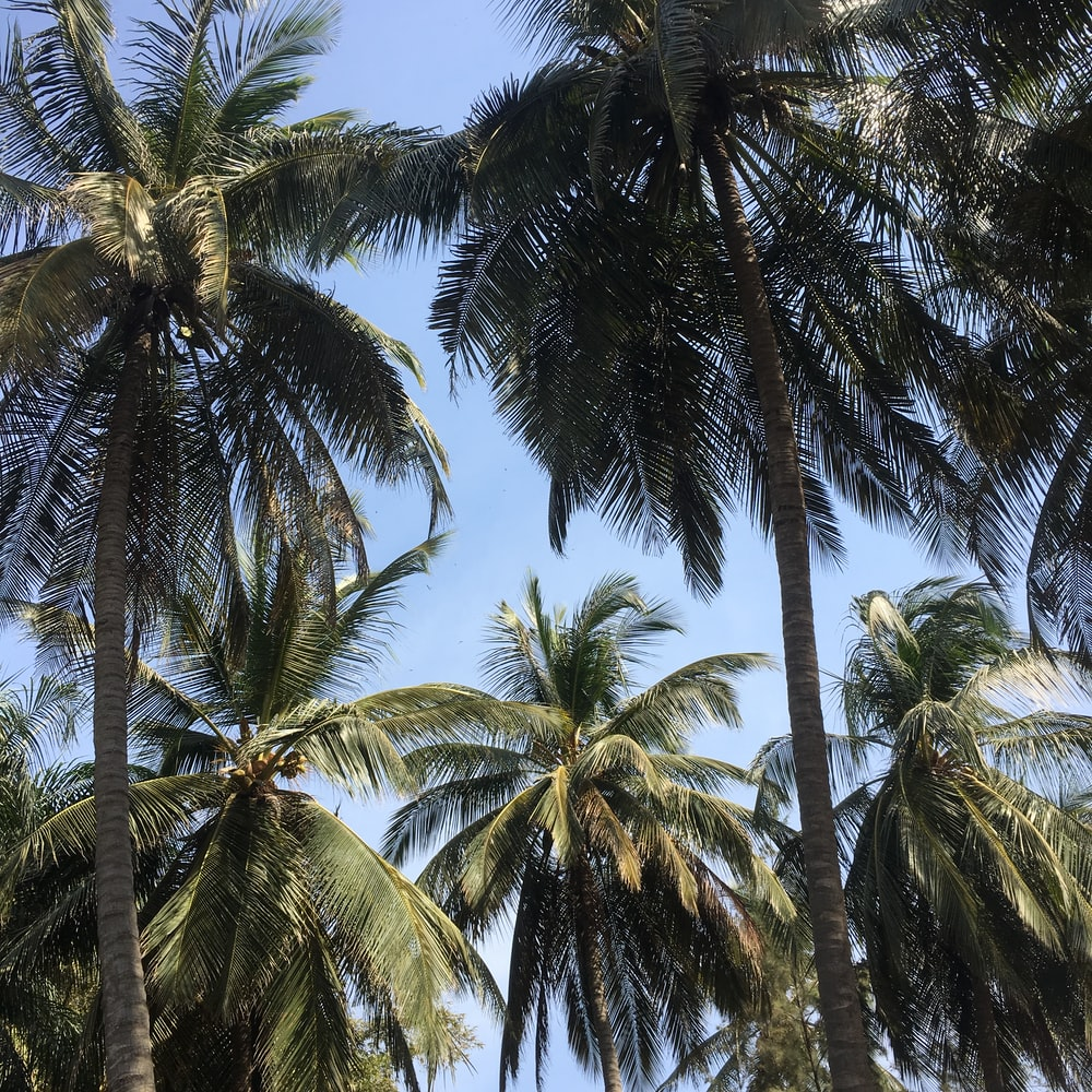 green palm trees under blue sky during daytime