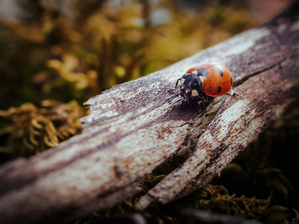red and black ladybug on brown tree trunk in close up photography during daytime