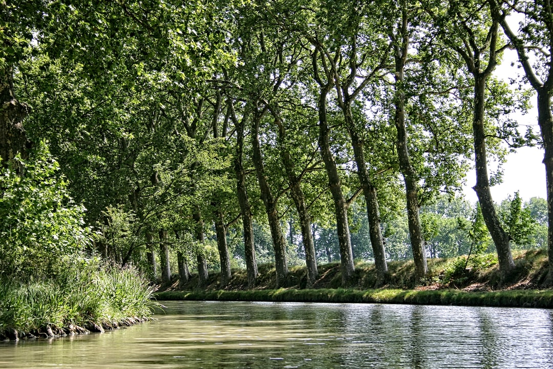 Trees lining the Canal du Midi