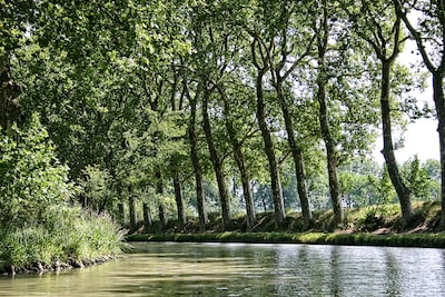 green trees on river bank during daytime