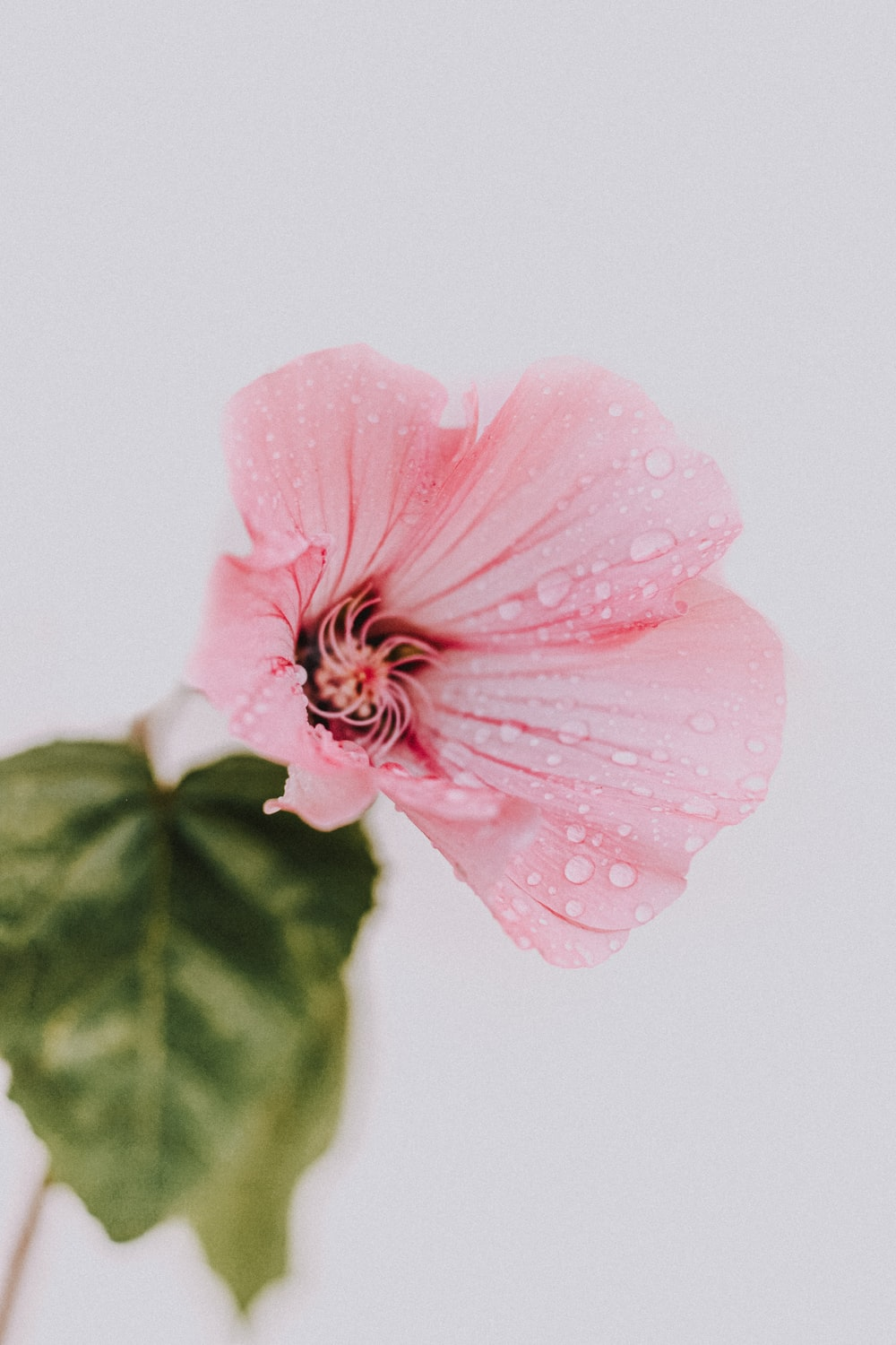 pink flower with green leaves