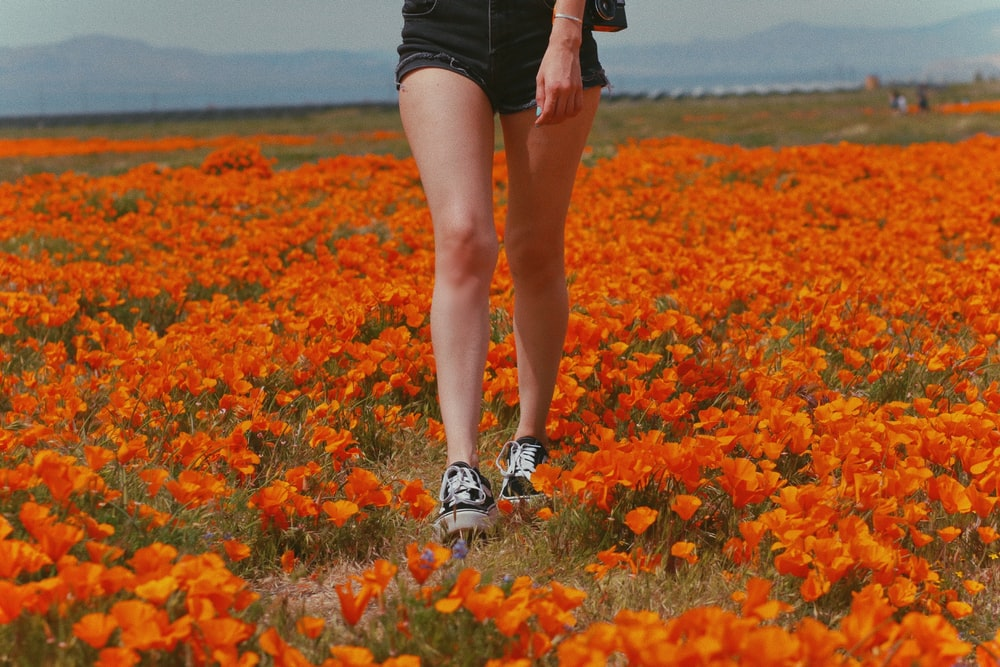 woman in black shorts and white sneakers standing on red flower field during daytime