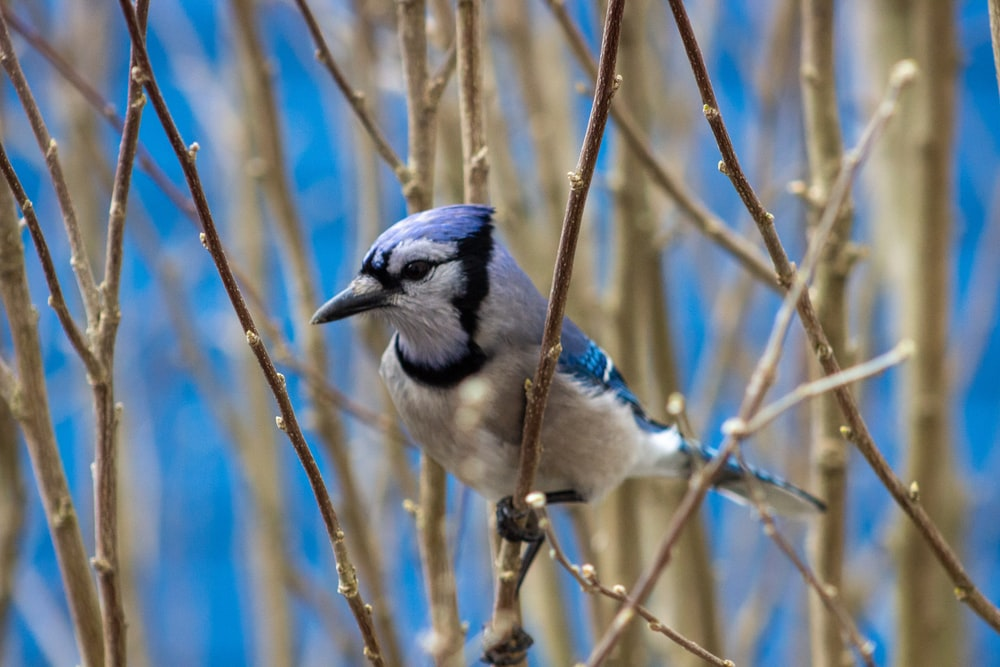 blue and white bird on brown tree branch during daytime