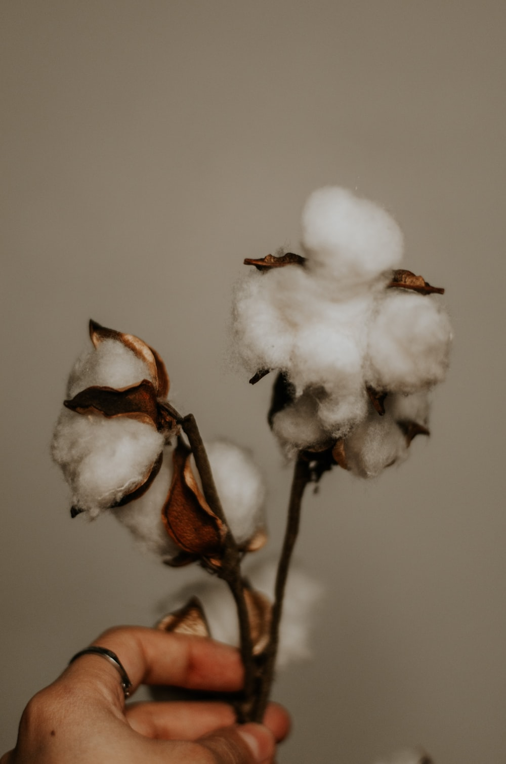 white and brown flower bud