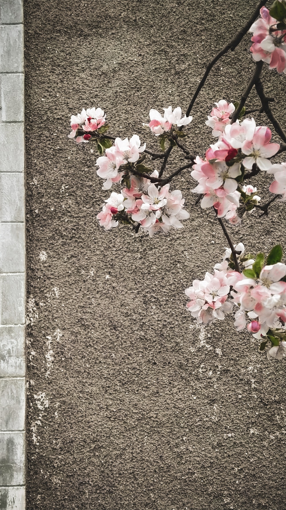 pink flowers on gray concrete wall