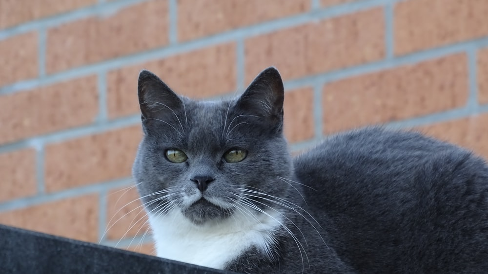 black and white cat on black metal fence