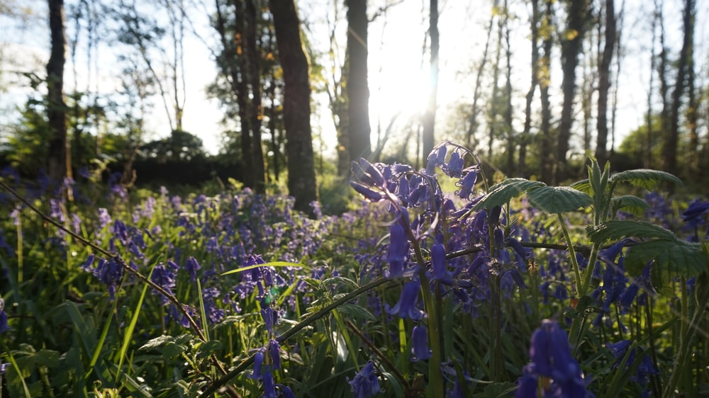 purple flower on green grass field during daytime