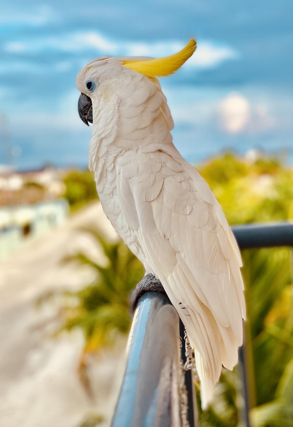 white and yellow bird on black metal bar during daytime