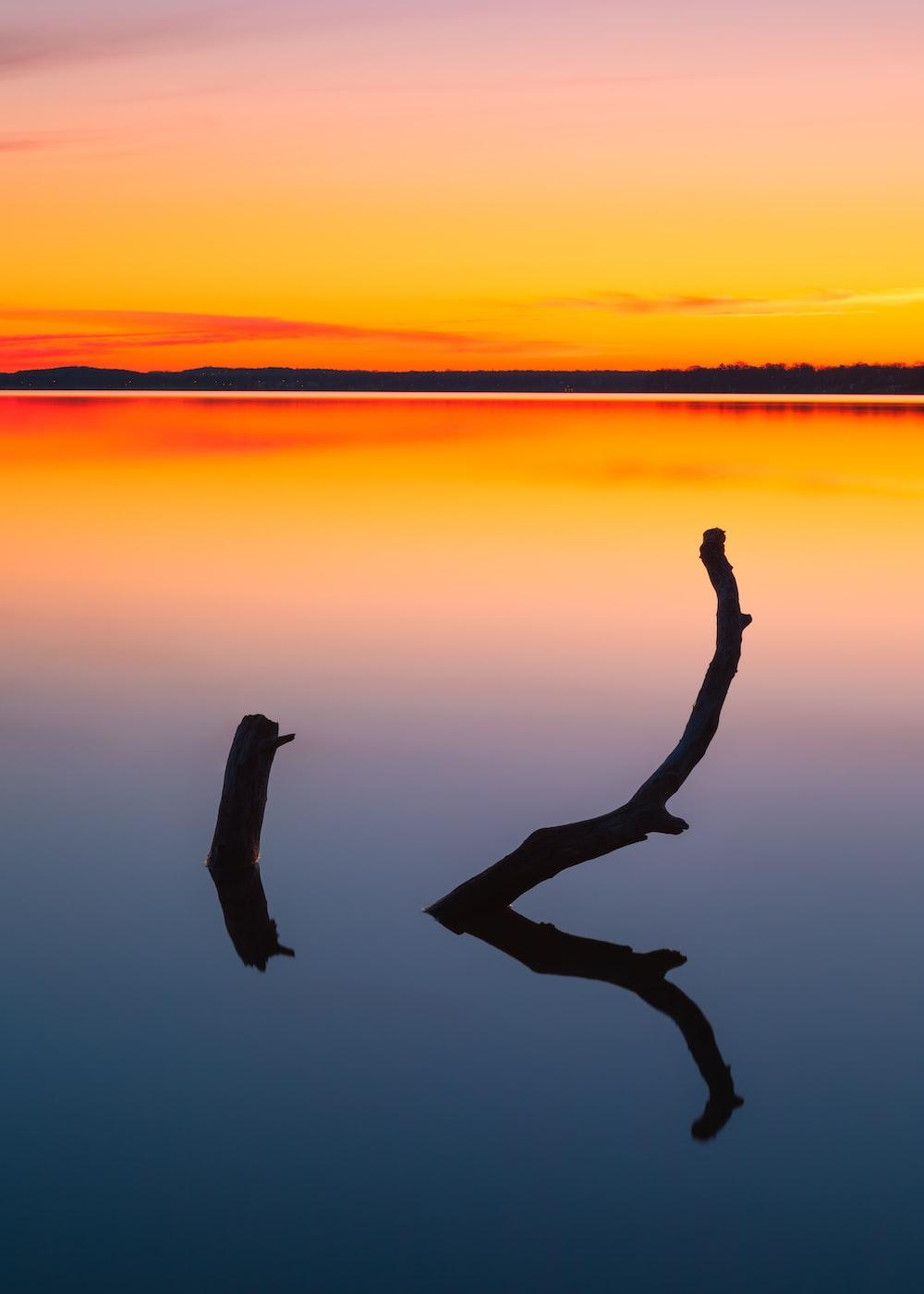 日没時に水にジャンプする人のシルエット