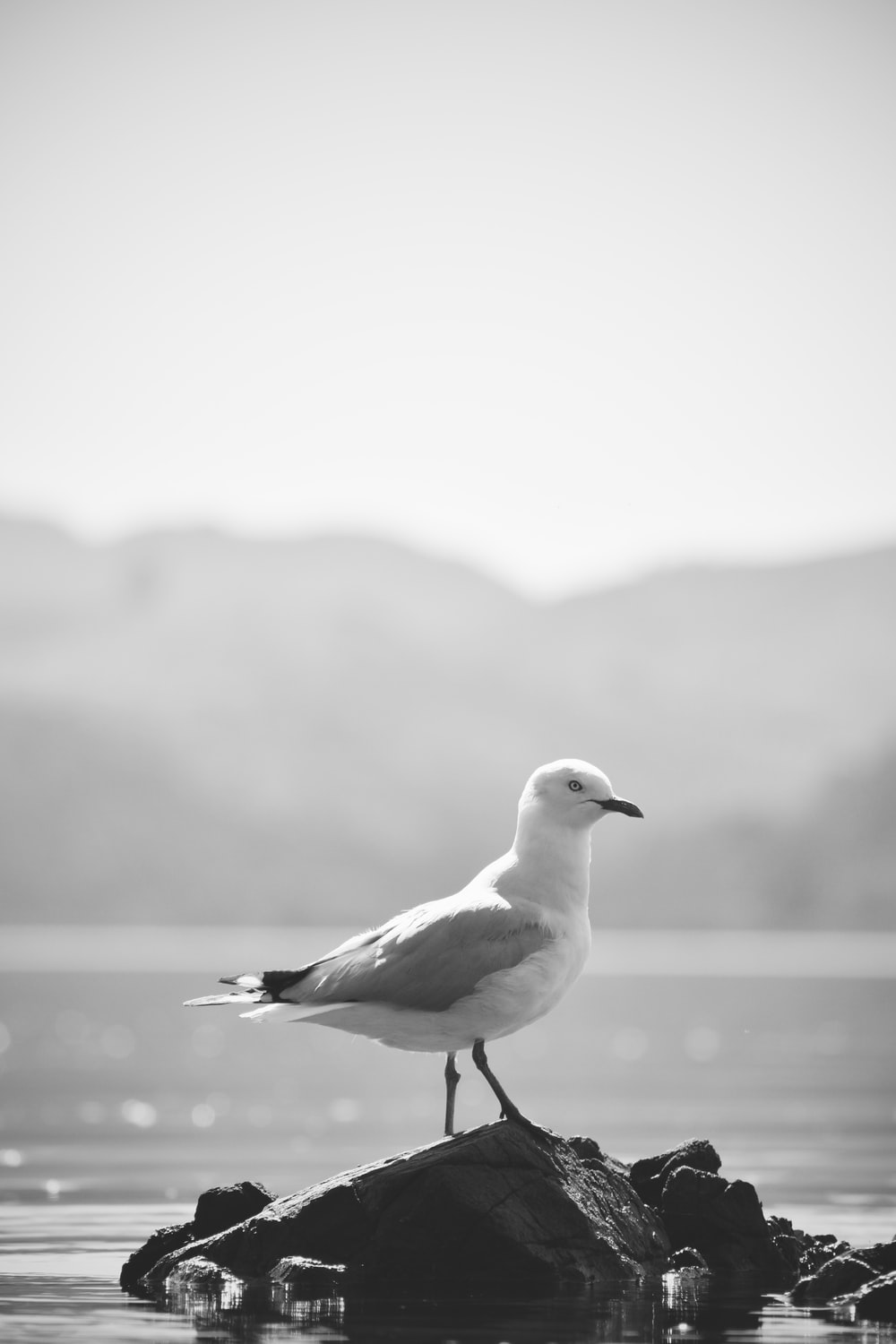 white and black bird on black rock