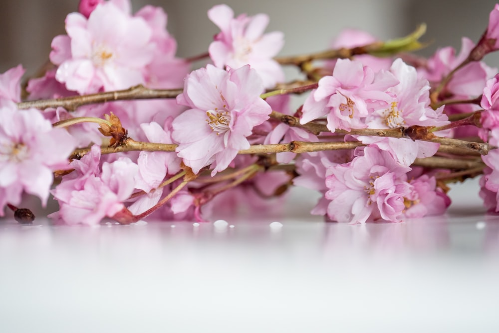 pink and white flowers on brown branch