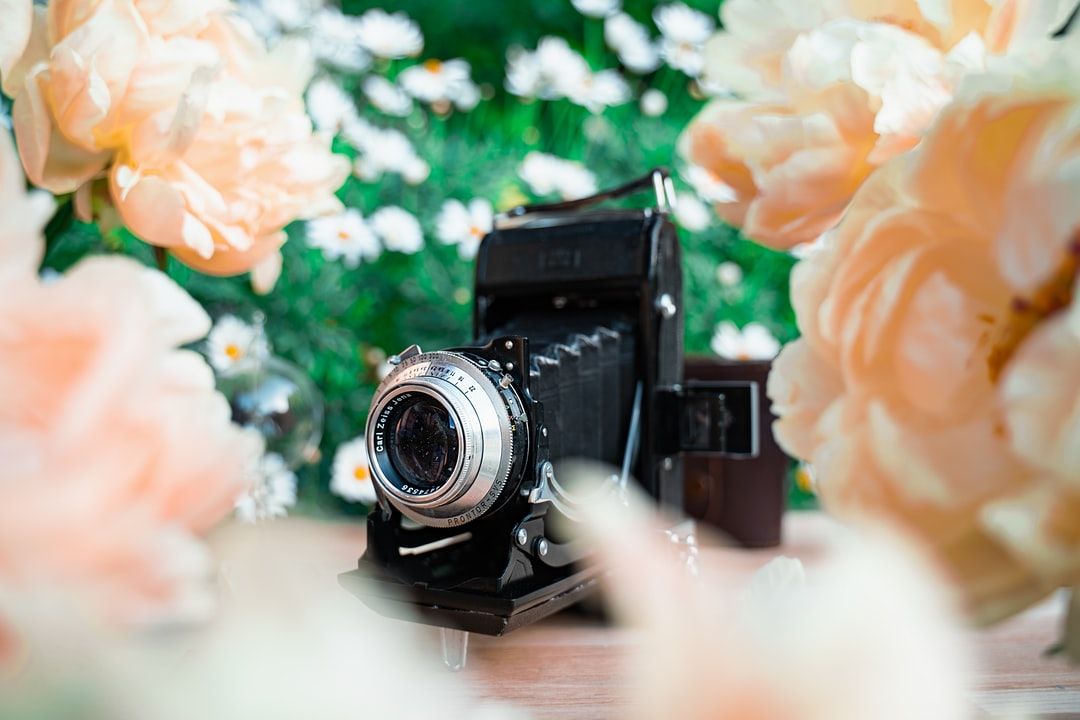 Vintage bellows camera in a garden with peonies and daisies flowers