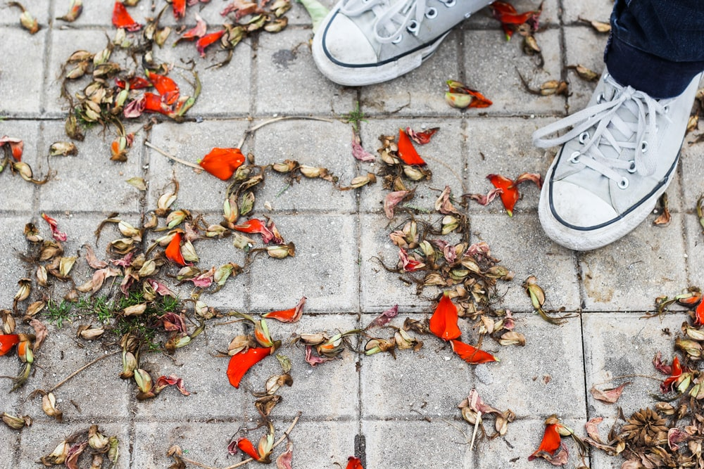 white low top sneakers on brown leaves