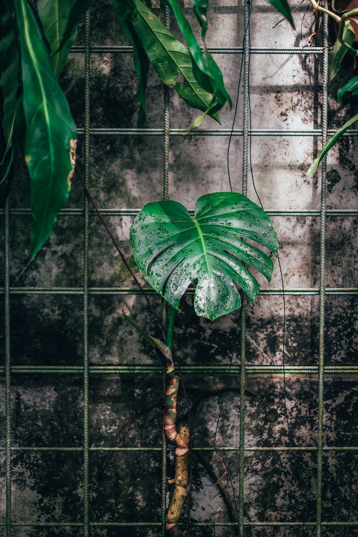 green leaf plant on black metal fence